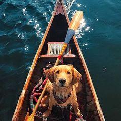 Dog Paddle Photo by @kjp