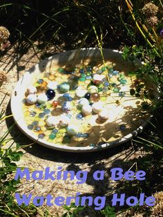 Making a bee waterin
