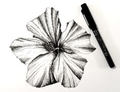 How to Draw Beautiful Floral Art with Pens Pencil Drawings Of Flowers, Flower Art Drawing, Flower Drawing Tutorials, Pencil Sketch Drawing, Floral Drawing, Pencil Art Drawings, Art Drawings Sketches, Easy Drawings, Art Tutorials