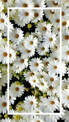 37 Ideas for wall paper sperrbildschirm natur Flower Phone Wallpaper, Free Phone Wallpaper, Iphone Background Wallpaper, Trendy Wallpaper, Pretty Wallpapers, Aesthetic Iphone Wallpaper, Nature Wallpaper, Screen Wallpaper, Cool Wallpaper