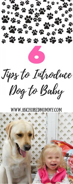 Tip to Introducing Dog to Baby + *IMPORTANT* Gerber Baby Photo Contest Info!