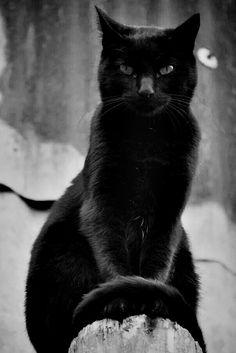 Meow Satan