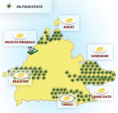 palm oil - Google Search