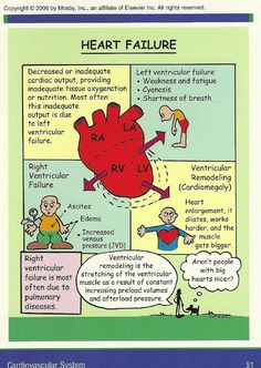 Heart Failure - is it left or is it right? Use this chart to help you figure it out. Great for studying Anatomy or Med Surg. Med Surg Nursing, Cardiac Nursing, Nursing Mnemonics, Pathophysiology Nursing, Surgical Nursing, Congestive Heart Failure Pathophysiology, Ob Nursing, Nursing Degree, Funny Nursing