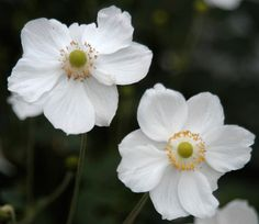 Check out this year's Perennial Plant of the Year.