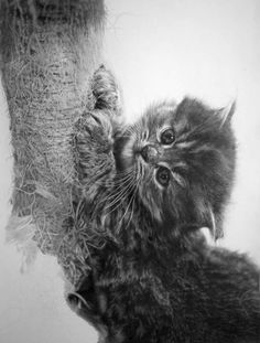 I want one of his originals...... Pencil Art by Paul Lung