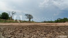 Stock Footage of A static timelapse of a dry, cracked river bed (Limpopo River) desperately waiting for rain as the storm clouds and thunder are building up. Explore similar videos at Adobe Stock Storm Clouds, Stock Video, Thunder, Stock Footage, Adobe, Waiting, Rain, Trees, African