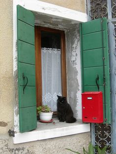 Black cat, red box, green shutters, lace curtain and a geranium! All in one window in Malamocco, Italy. Cat Window, Window Boxes, Window Sill, Green Shutters, Lace Curtains, Through The Window, Doorway, Windows And Doors, Stairways