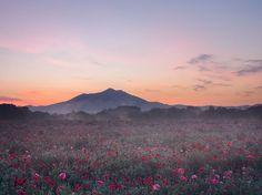 Fotografia di Katsuyoshi Nakahara, National Geographic Your Shot  I papaveri fioriscono in un campo alle pendici del Monte Tsukuba, in Giappone.