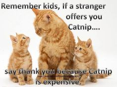 and pets esl conversation cards, and pets 7 vet an and pets esl ppt greetings around the world, my family and other animals pets as kind as a simile is like a song. Silly Cats, Crazy Cats, Funny Cats, Funny Animal Images, Cute Funny Animals, Animal Pics, Cat Quotes, Animal Quotes, Pretty Cats
