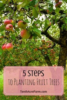 Fall is the best time to plant fruit trees. With a simple planting process, you can set your fruit trees up for success. Planting Fruit Trees, Growing Fruit Trees, Fruit Plants, Fruit Garden, Garden Trees, Edible Garden, Vegetable Garden, Garden Plants, The Farm