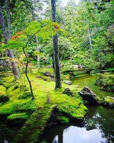 #旅行#観光#京都#西芳寺#苔寺#庭園#神社仏閣 #写真好きな人と繋がりたい #ファインダー越しの私の世界 #カメラ部#写真部 #beautiful#japan#asia#kyoto#lovekyoto#saihoji#temple#cooljapan#naturelovers#japanese#garden#traveler#trip#pic#sightseeing#scenery#landscape#foreigner#recommended