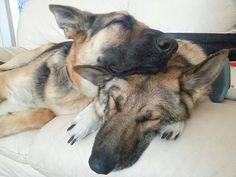 German Shepherd Dog. Check out my Facebook page dedicated to German Shepherds https://www.facebook.com/GermanShepherdDogFans
