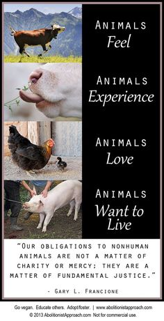 "Animals Feel ~ Animals Love ~ Animals Experience ~  Animals Want To Live. ""Our obligations to non-human animals are not a matter of charity or mercy; they are a matter of fundamental justice."" - Gary L. Francione ● Go Vegan. Educate Others ● ADOPT/Foster"