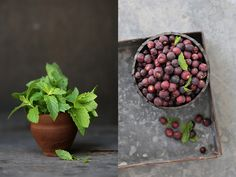 Berries & Mint ... perfect pairing for the Indian summer