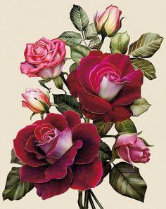 Оригинал схемы вышивки «Розы»