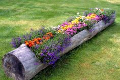a hollowed log raised flower bed is a super cool idea