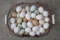 Huevos para curar la resaca