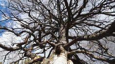 #puu vanha #tree old #Finland Valokuva - Google Kuvat