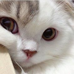 So süß - Cute Animals - Cute Kittens & Cats - Super Pin Photos ! Cute Kittens, Pretty Cats, Beautiful Cats, Beautiful Babies, I Love Cats, Crazy Cats, Cool Cats, Cute Baby Animals, Funny Animals