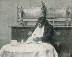 Consul, the Trained Chimpanzee, at Breakfast. Illustration for the Harmsworth Natural History (1911).