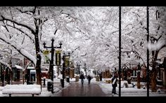 Pearl Street In the Snoow - 2009 Photo Contest Winner Anish