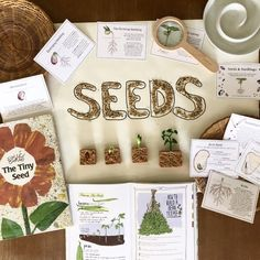 100 Resources for Homeschool Nature Study Chickie & Roo Homeschool Preschool Science, Science Activities, Kindergarten Inquiry, Nature Table, Nature Journal, Nature Study, Home Schooling, Childhood Education, Science And Nature