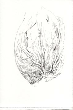 245 Seed Bank, Drawings, Sketches, Drawing, Portrait, Draw, Grimm, Illustrations