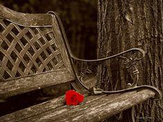 Flower - Waiting