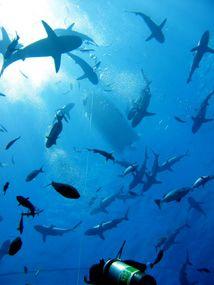 Coral Sea liveaboard Thurs-Mon
