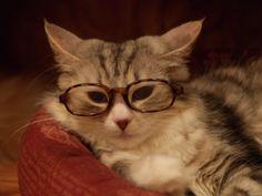かわいい猫の画像が欲しい : あじゃじゃしたー