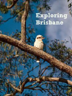 Exploring Brisbane