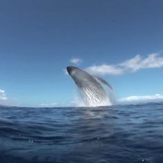 Merimbula Whale Watching October to December Underwater Creatures, Ocean Creatures, Underwater World, Beautiful Sea Creatures, Animals Beautiful, Cute Animals, Blue Whale Video, Delphine, Funny Animal Videos