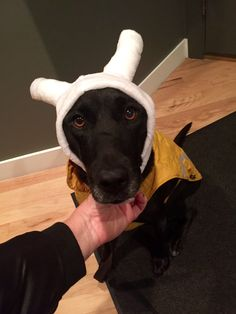 Stella, golden-jack russell-pit-chow mix and eye enchantress dressing for the cold!