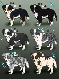Border Collie Puppies (closed) by ~Amber-Mist-Kennels on deviantART