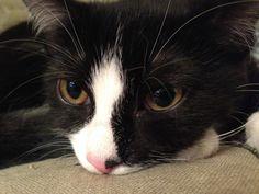"""Mizzi ist unsere schwarz-weiße zarte Katze die immer einen so erschreckten Blick drauf hat, als würde sie sagen: """"Huch, Ich wusste nicht, dass man das nicht darf"""". Sie ist keine Draufgä…"""