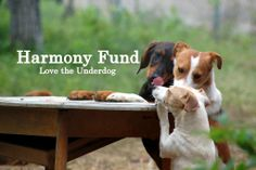 "The Harmony Fund offers a lifeline to so called ""underdog"" animal rescue squads across the planet. Our partners are the small but incredibly courageous and effective animal rescue teams who operate in parts of the world where funding is very hard to come by."
