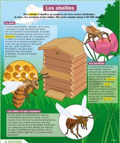 Fiche exposés : Les abeilles