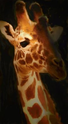 "Art Reproduction Oil Painting Giraffe Classic 20"" X 24"" - Hand Painted Canvas Art' onload=""if (typeof uet == 'function') { uet('af'); } $25.00"