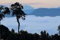 This once vast island of tropical rainforest has shrunk significantly over the past 50 years due to illegal logging, among other things