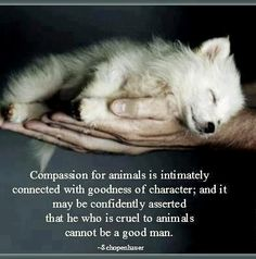 Compassion for animals is intimately connected with goodness of character; and it may be confidently asserted that he who is cruel to animals cannot be a good man.