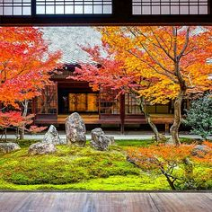 "Kenninji temple Cho-on-tei garden 4/12/2017 People can be watched this garden from all sides. The autumn leaves peak today🍁 Photographers are waiting to shoot both autumn leaves of the garden and the paintings of the Fujin Raijin.📷 In the other room, Japanese and Chinese tourists . I asked cooperation with Japanese, English and mama smile.🙏 ""We are waiting for a shutter opportunity that people will be out of this room.Please give us a time for only 5 minutes.And let's take a picture…"