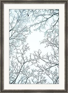 Jenny Rainbow Fine Art Photography Framed Print featuring the photograph Winter Framing by Jenny Rainbow Framing Photography, Fine Art Photography, Art Prints For Home, Time Art, Hanging Wire, New Wave, Art Techniques, Wood Print, Clear Acrylic