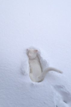 Snow cat - like a white on white design. Hope it turned around and got back inside the house.