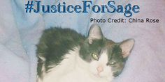 petition: Justice for the torture of Sage the Cat, Clearfield, UT