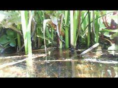Introduction to BioHavens - Floating Islands West (www.floatingislandswe...