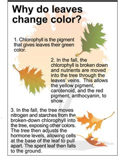 Why Do Leaves Change Color and Fall ? Why Do Leaves Change Color and Fall ? Fall Preschool Activities, Free Kindergarten Worksheets, Science Worksheets, Science Lessons, Teaching Science, Free Printable Worksheets, Autumn Leaf Color, Changing Leaves, Easy Science