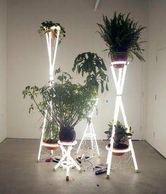 Hmmm. . . .Neon plant idea.