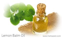 Often confused with essential oil, an herbal oil is a much simpler preparation. Lemon balm oil can be made at home and it is useful for topical treatments.