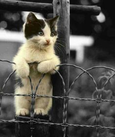 Kitten on a wire fence